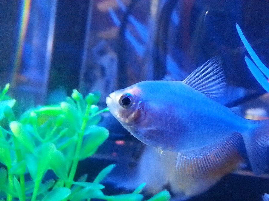 How Do You Know If Your Glofish TETRA Is Going To Have A ...