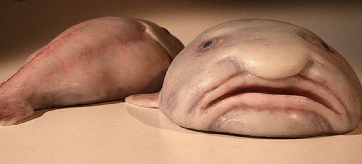 ugly face fish - 645×509