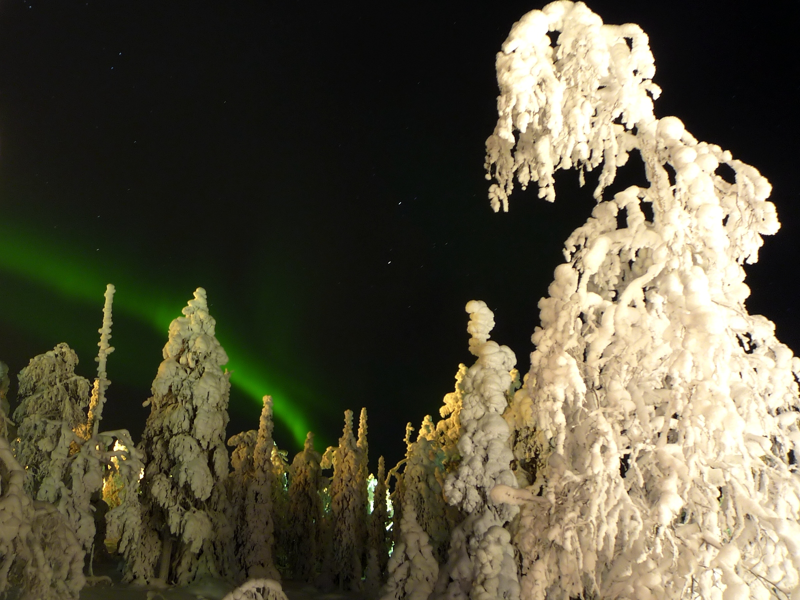 Northern Light And Garden