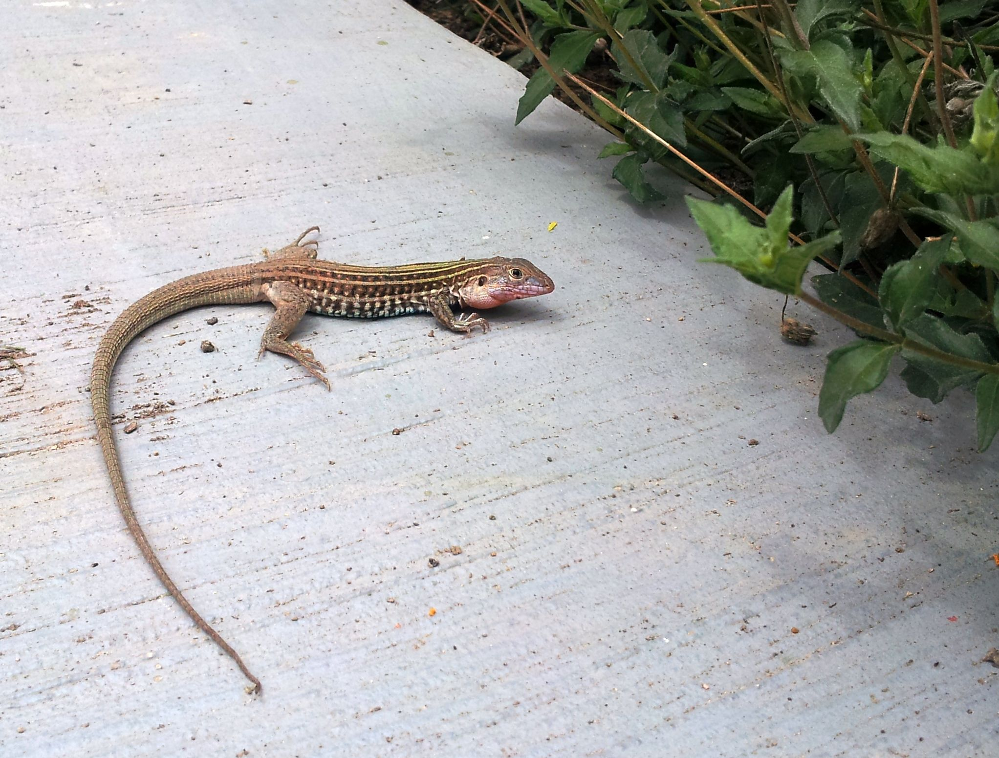 Reptile Gardens Pictures Everything