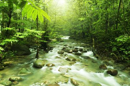 Flora And Fauna Malaysia