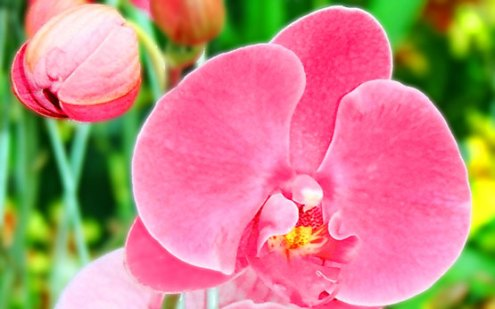 Chinese Symbolism of Plants   Chinese Customs Orchids