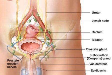 Interior Internal Prostate Massage Benefits Full Hd Maps Locations