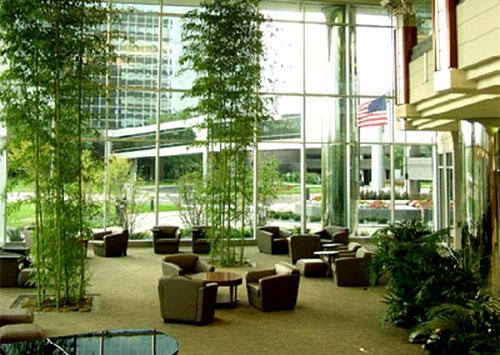 Best Indoor Plants Home