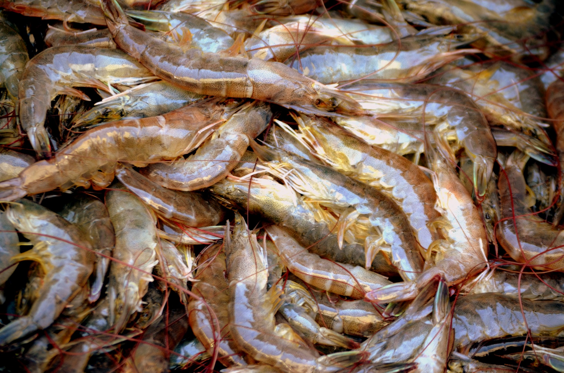 Why You Should Never Buy Walmart Or Costco Shrimp