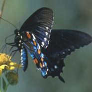 Field Guide To Butterflies, Dragonflies, And Damselflies - Outdoor Eating Area