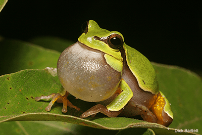 Attracting Amphibians