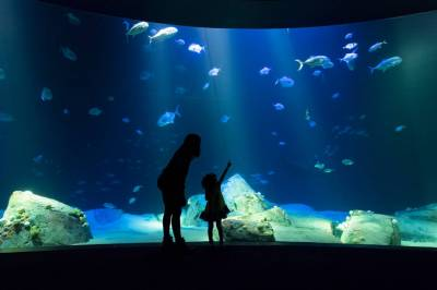 New York Aquarium, Coney Island: Planning Your Visit