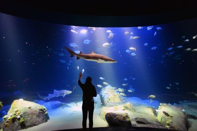 Jaw-dropping shark exhibit coming soon to New York ...