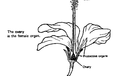 Diagram of flowering plant to label new artist 2018 new artist diagrams glossary of plant morphology label flowering plant anatomy basic plant life cycle and the life cycle of a flowering plant plant diagram awesome ccuart Image collections