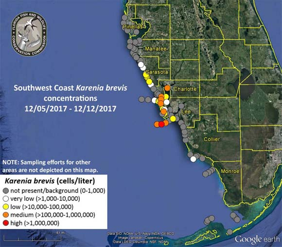 Red Tide Charlotte Florida County