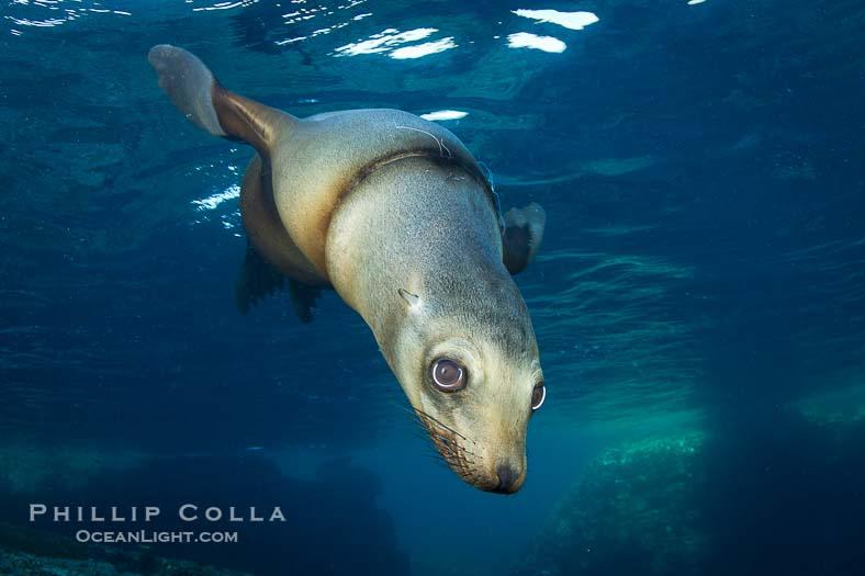 Risk Environment Marine Environmental