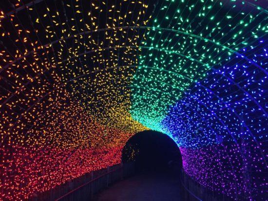 Zoo Lights Ohio