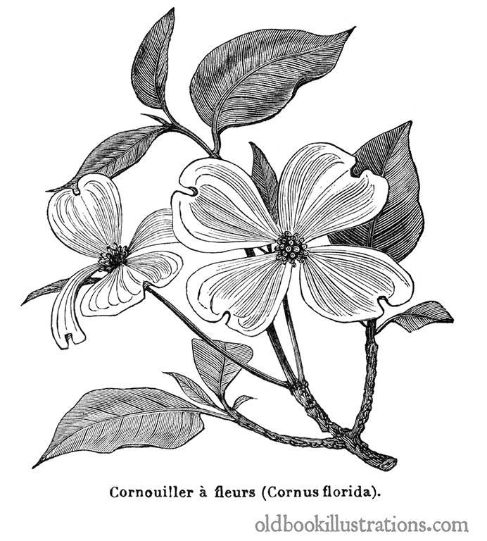 Tattoo Flower Vitae Lignum