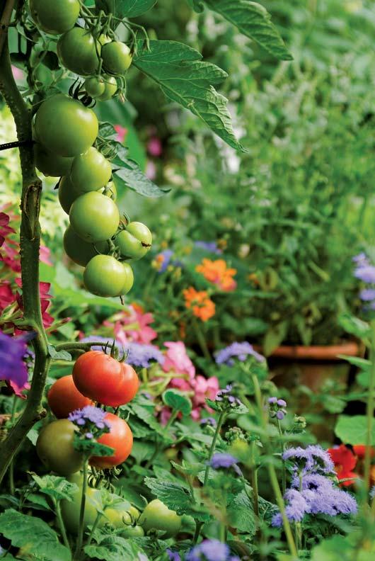 Order Fruits And Vegetables Online