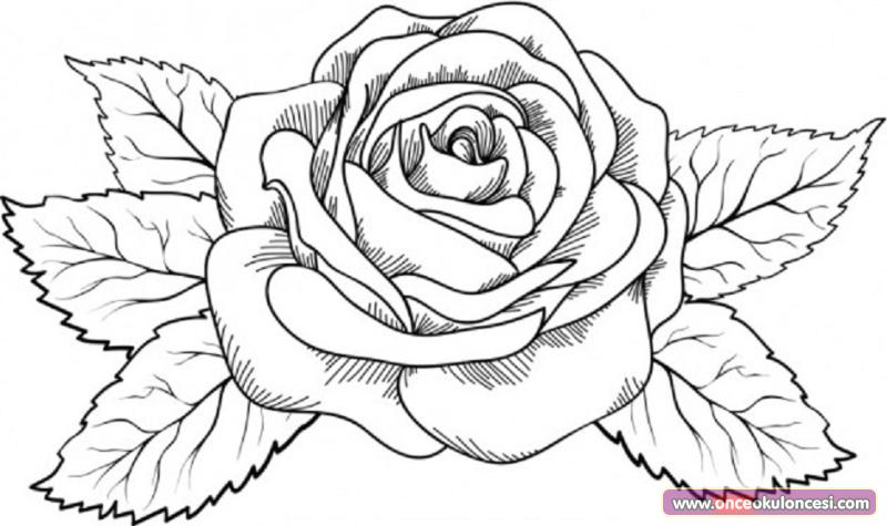 La Rosa De Guadalupe Black And White