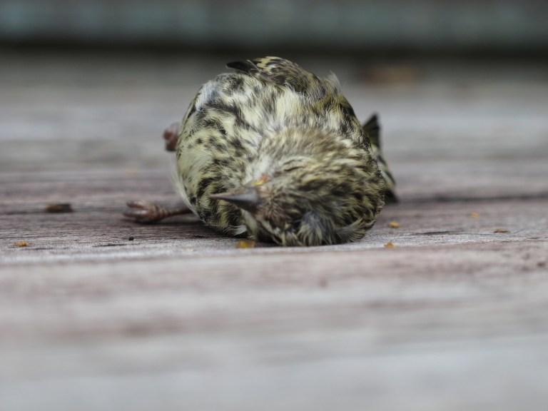 "Petition: Pass ""Bird-Friendly"" Glass Building Ordinances"