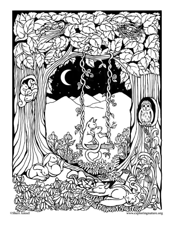 forest coloring page # 73