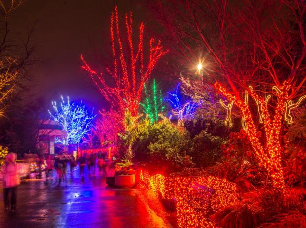 Oregon Zoo Lights Hours