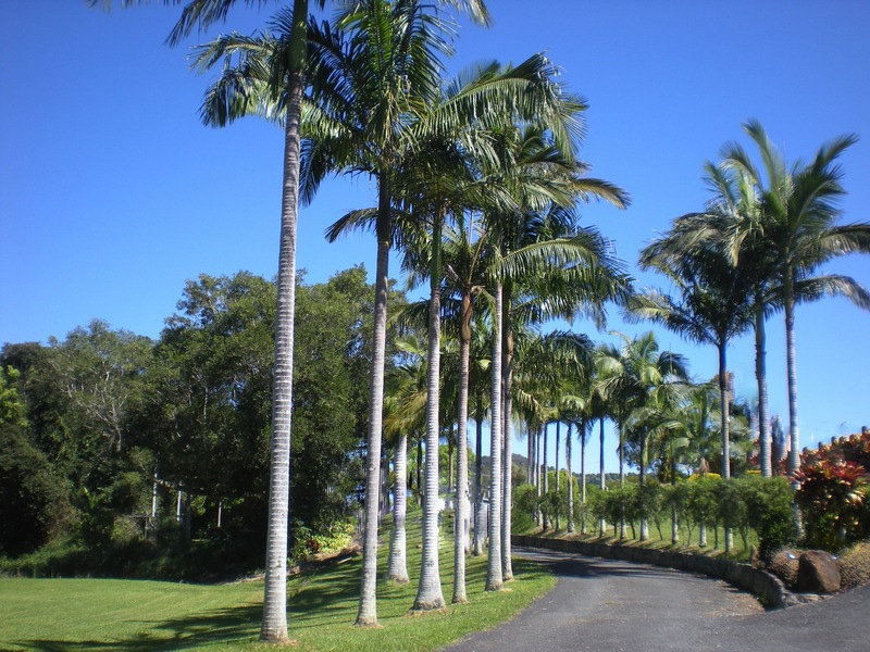 Types Palm Trees Australia