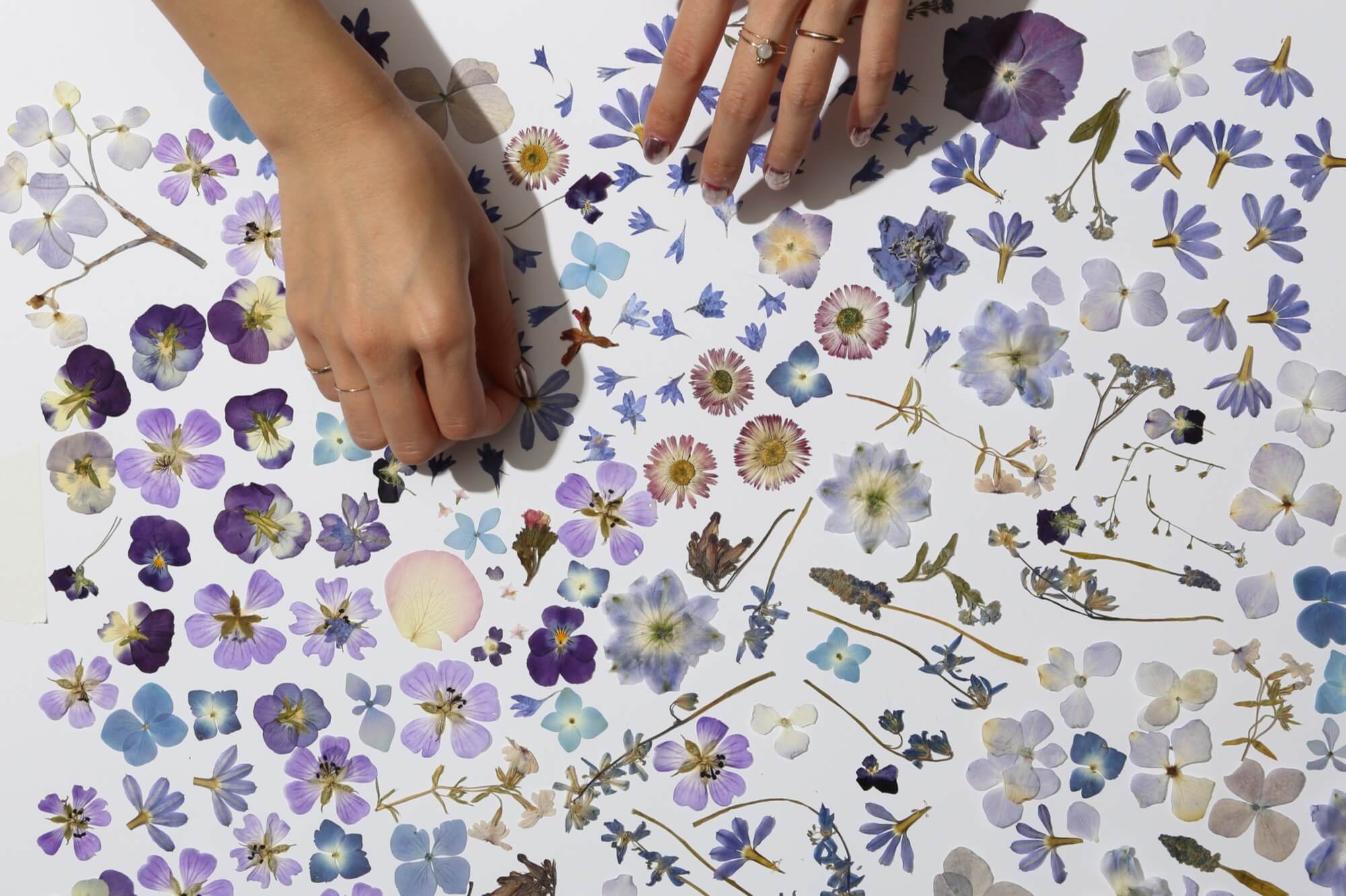 Pressed flower tips and tricks from our studio     Paperless Post Blog It takes time  you can in theory  just leave your flowers in this  contraption for a few weeks  and then unwrap the present  But if time is at  a surfeit