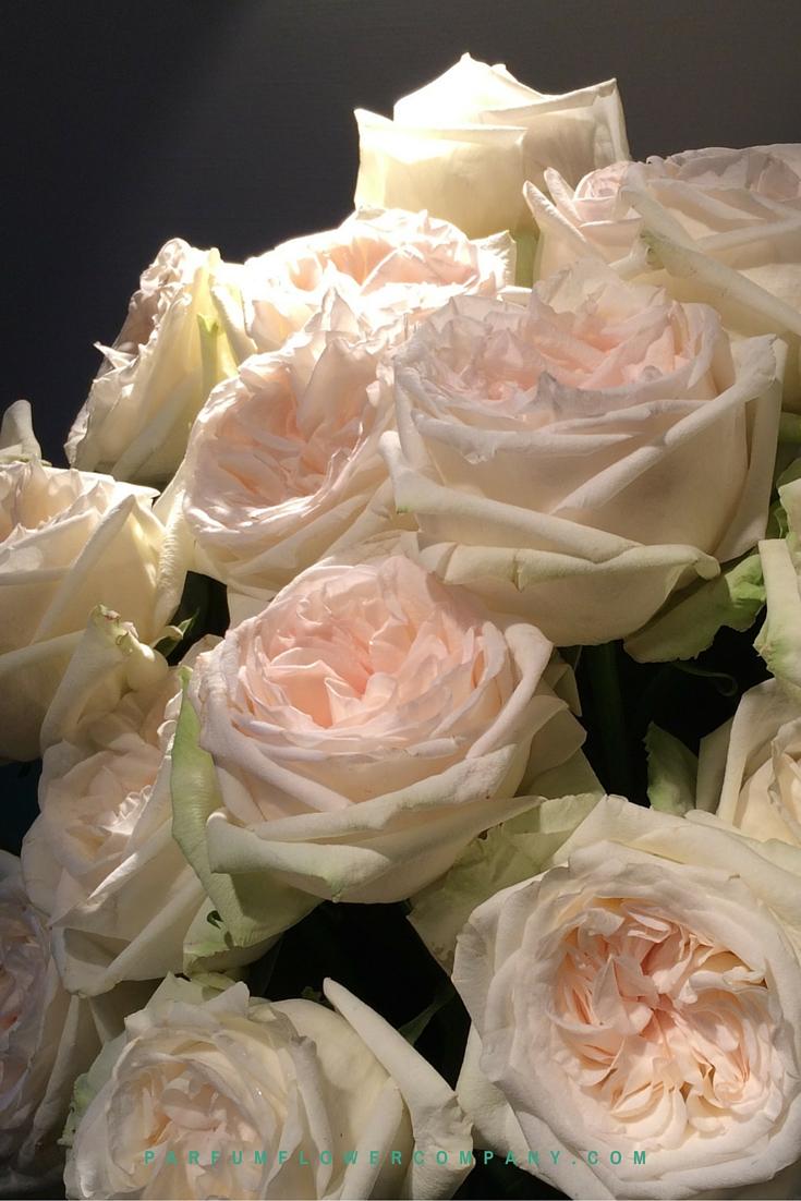 Large White Flower Pot