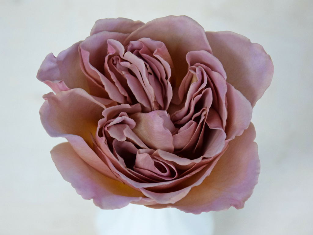 Rose Cafe Latte
