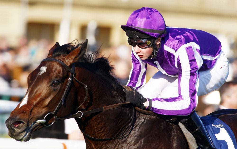 Coolmore Classic Winner Camelot Doing Great After Colic