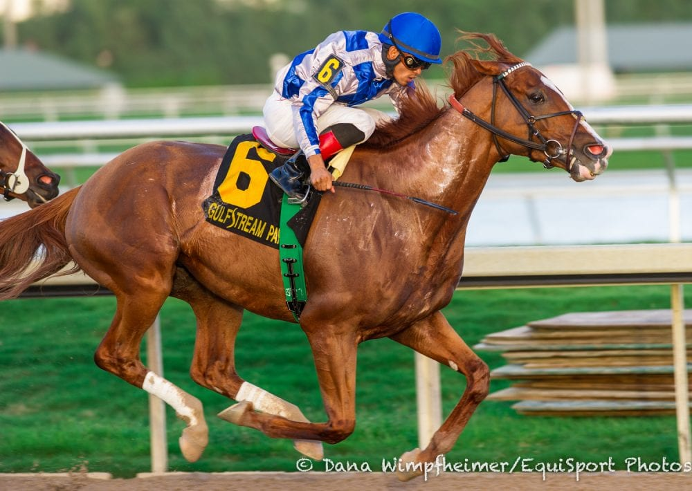 Lea Takes Hal S Hope In Debut For Mott Horse Racing News