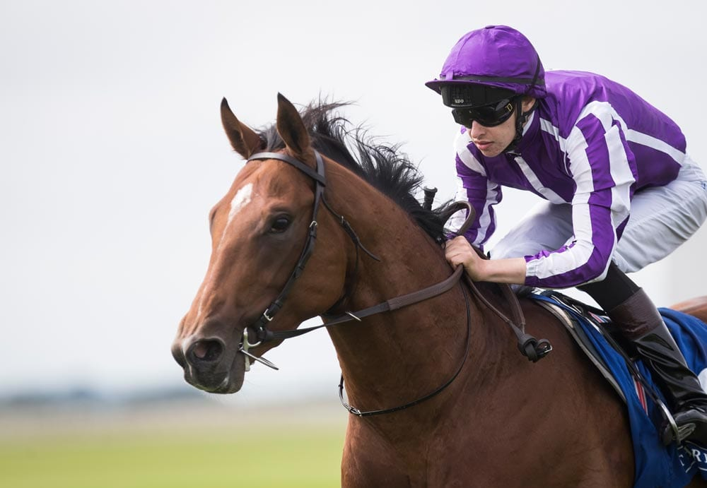 Undefeated Saxon Warrior Heads Field Of 14 For Saturday S