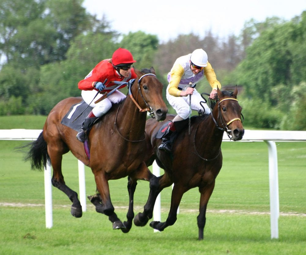Study Suggests Race Training Too Hard For Equine Legs