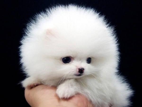 Cutest Pug World Animals