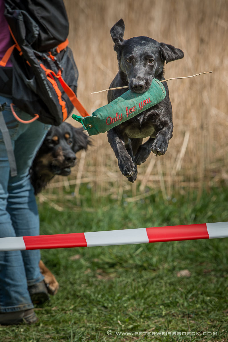 Dogs Action Peter Weissb 246 Ck