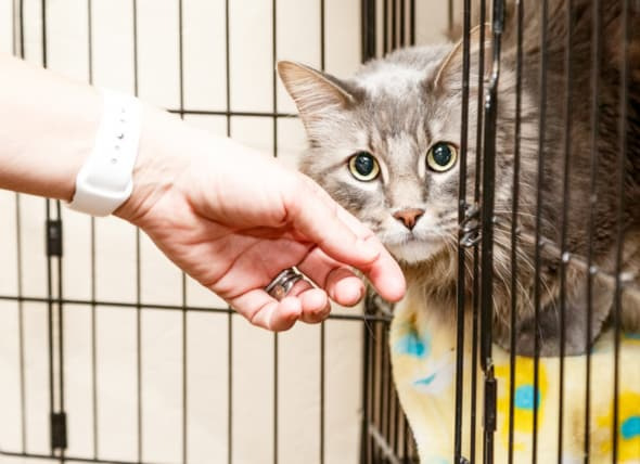 Image of: Sad 10 Signs Of Bad Animal Rescue Petmd 10 Signs Of Bad Animal Rescue Petmd