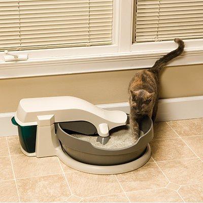 5 Steps To Litter Box Train Cats Petsafe 174 Articles