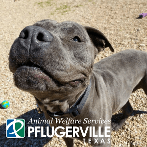 Image of: Four Paws Provisions Of The Animal Control Ordinance Include Paws Paros Animal Welfare Society Animal Welfare Services City Of Pflugerville Texas