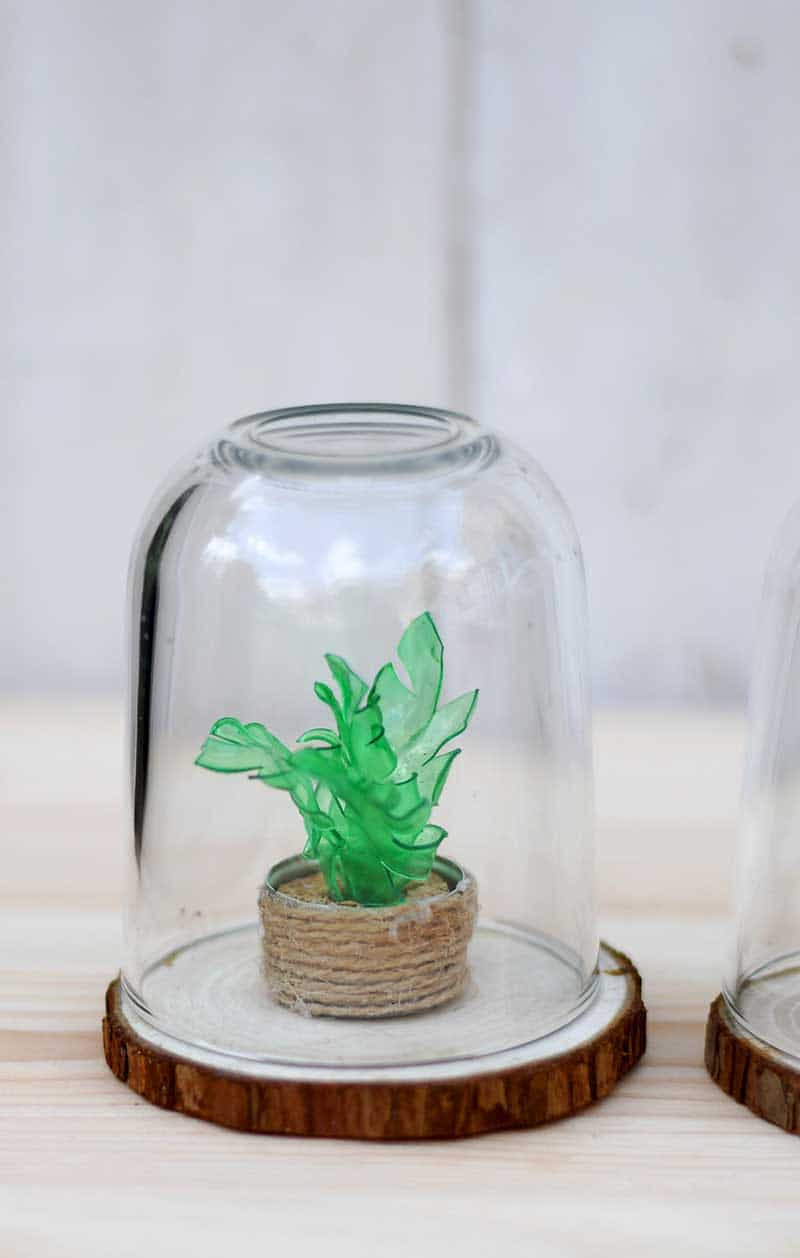 How To Make A Plastic Bottle Faux Succulents Terrarium