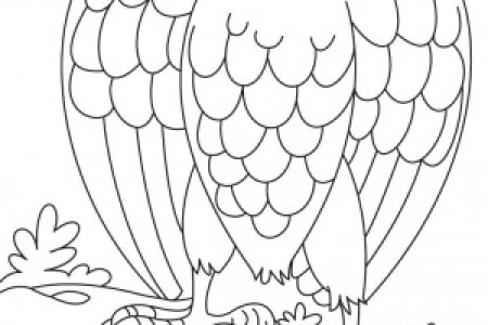 Results for Dibujos Aguila Real Para Colorear