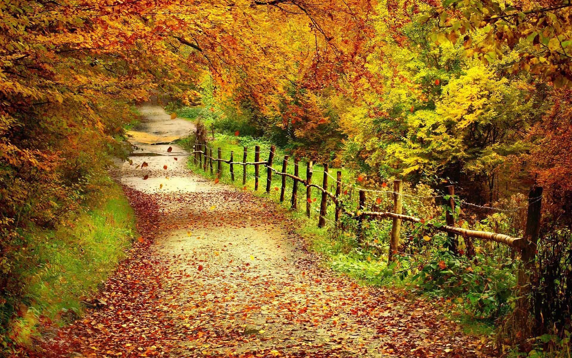 Wallpaper Desktop Country Widescreen Fall