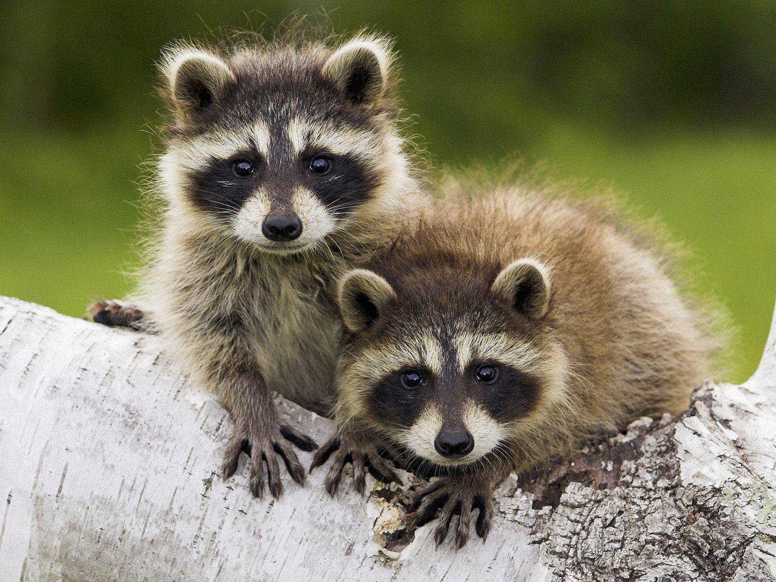 Cute Baby Animal HD Wallpapers | PixelsTalk.Net