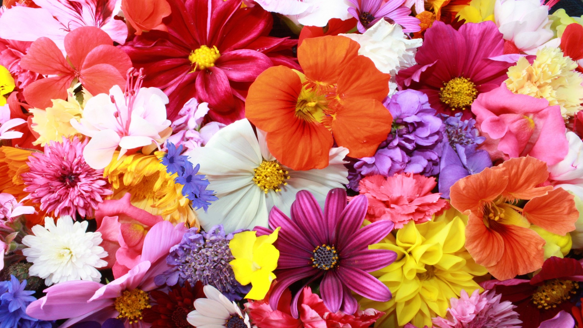 Desktop Backgrounds Floral Dark