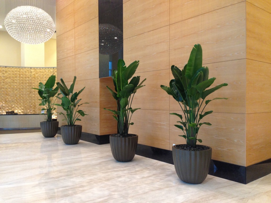 Interior Plant Design Photos   Plant Professionals   Miami  FL Interior Plants