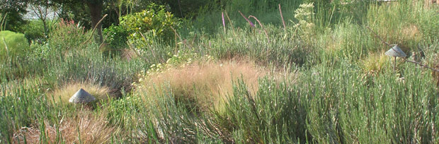 Plants Found Ponds