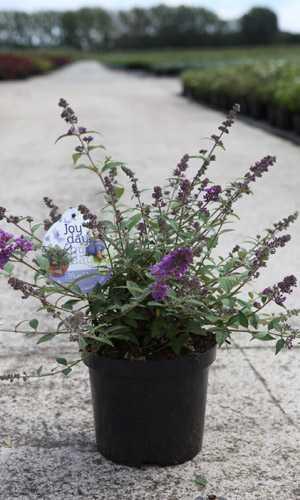 Cheap Plants Online
