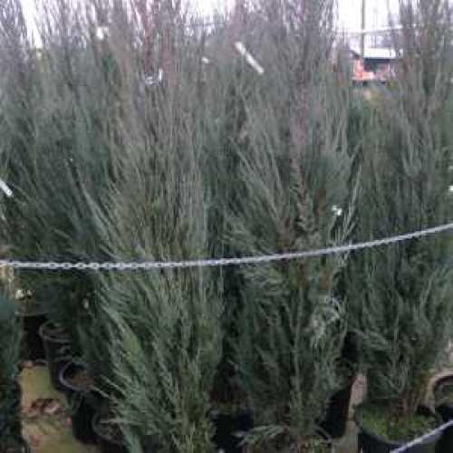 Grey Rattan Planters