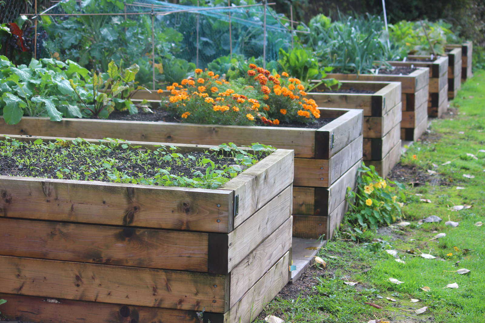 Diy Vegetable Garden Box