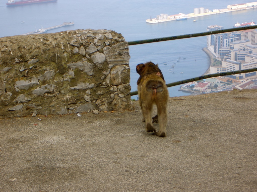 Macaw Monkey at Rock of Gibraltar