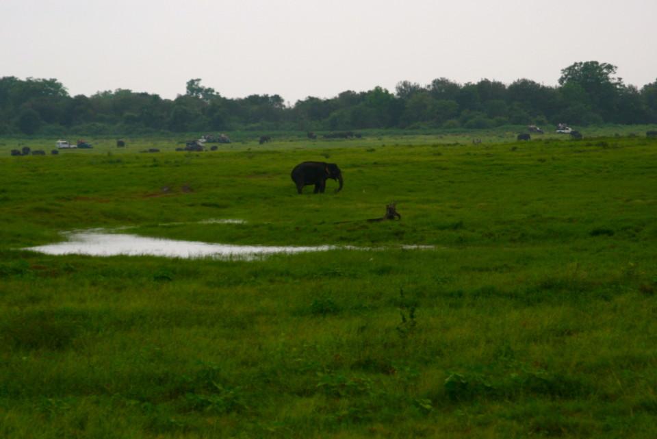 at Kaudulla elephant safari park, sri lanka, Elephant Safari, Elephant Safari Park