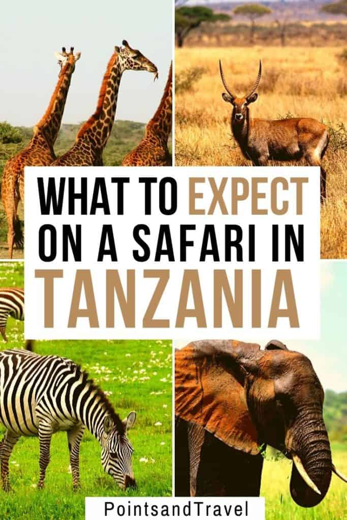 What to expect on a Safari in Tanzania Africa, Seduced by the Serengeti, Africa, African Safari, the Serengeti, #AfricanSafari #Safari #Tanzania