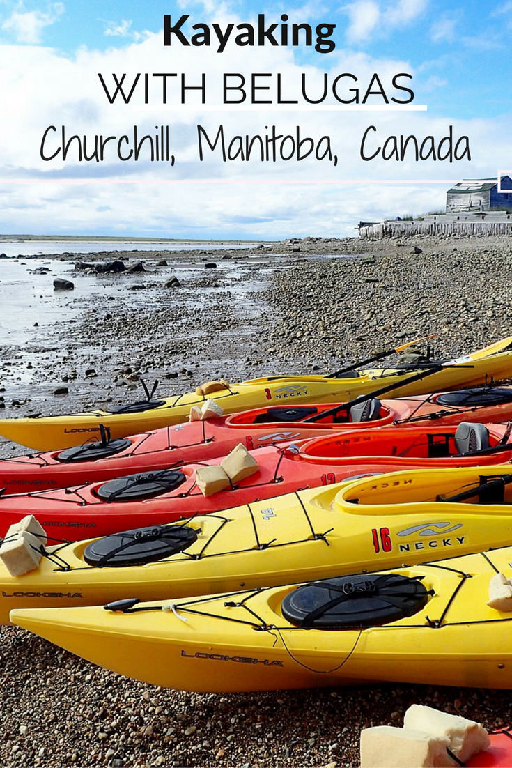 Dreams about Whales: Come along with me as I kayak with Beluga Whales in Manitoba, Canada